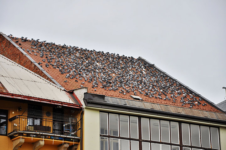 A2B Pest Control are able to install spikes to deter birds from roofs in Arkley.