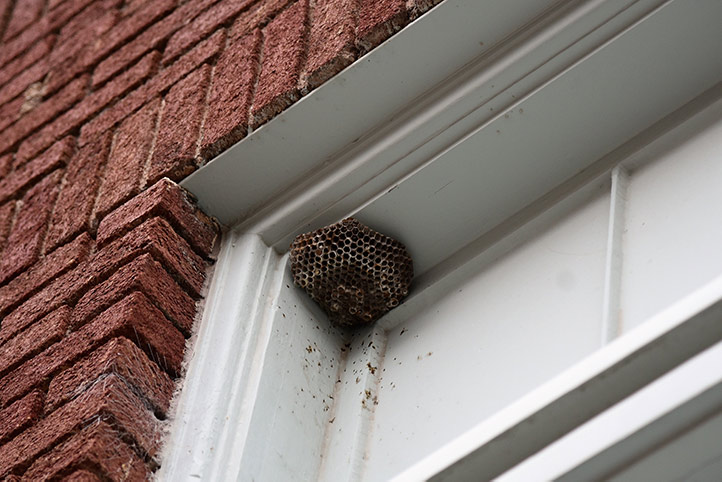 We provide a wasp nest removal service for domestic and commercial properties in Arkley.